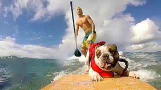PEOPLE ARE AWESOME (PETS EDITION) | SURFING & SKATEBOARDING DOGS!