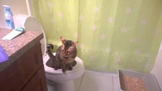 Кот сам ходит в унитаз