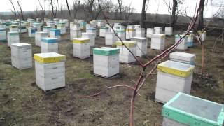 Пасека. Первые дни весны 2015. Пчеловодство в Украине.(Сошел снег, температура постепенно поднимается выше нуля и наша пасека начинает оживать., 2016-12-14T21:55:28.000Z)