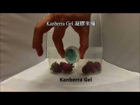 Kanberra Gel 草莓防霉測試