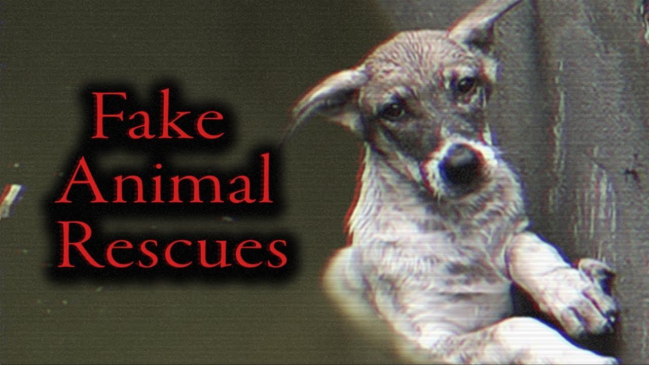 YouTube's Fake Animal Rescue Ring