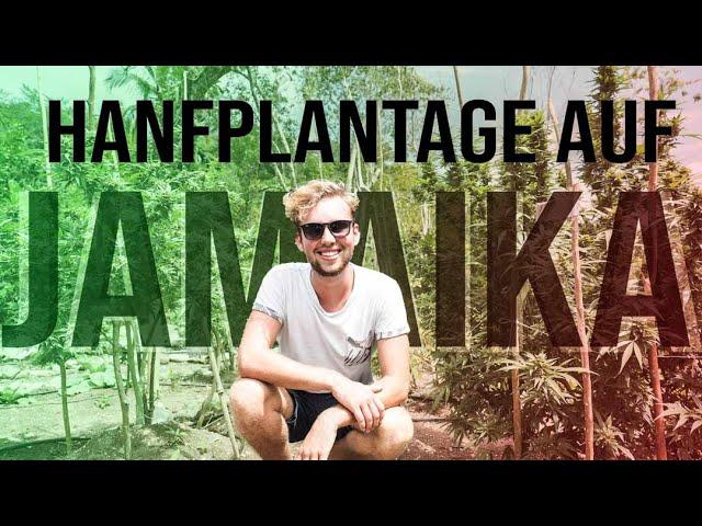 #045 | WEEDFARM im Dschungel auf JAMAIKA [Segeljungs Weltumsegelung]