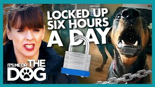 Dobermans Duo Put On LOCKDOWN for Hours a Day | It's Me or The Dog