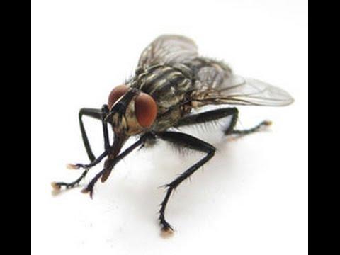 Как правильно ловить мух.