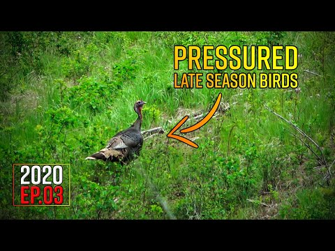 Pressured Gobblers - Washington Spring Turkey Hunt | 2020 Hunting Season EP.03