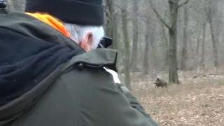 Polowanie zbiorowe - strzał do dzika - Drückjagd - vildsvinsjakt - driven hunt - Chasse Au Sanglier