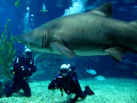 Diving with Sharks - Siam Ocean World -  Bangkok