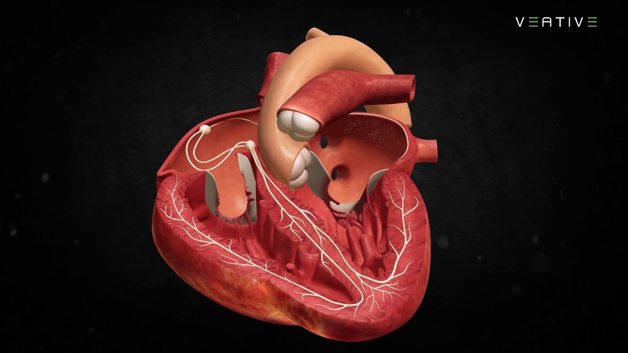 Heart Anatomy Learn How Human Heart Works Veative Labs Youtube