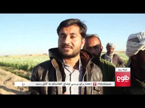 NIMA ROOZ: Afghanistan Still World's Largest Opium Producer