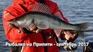 Рыбалка на Припяти, судаки на джиг - Сентябрь 2017