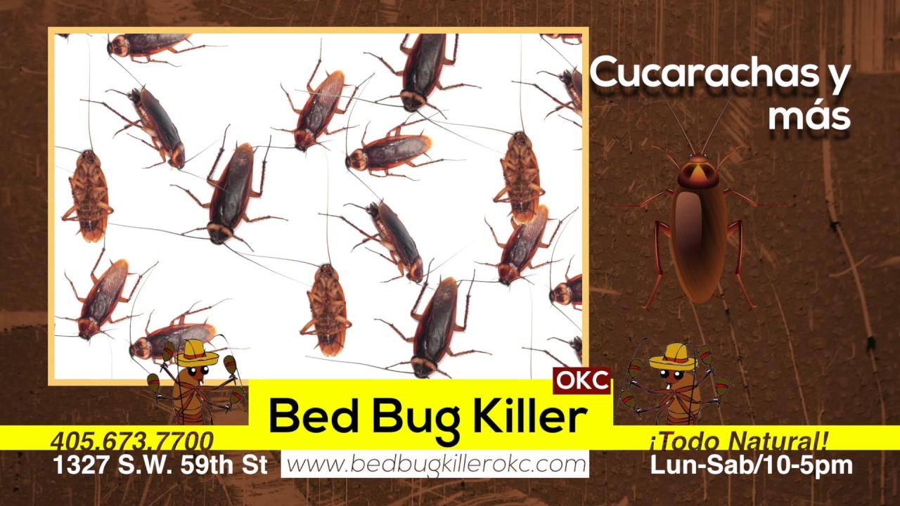 bed bug killer 05 16 - youtube