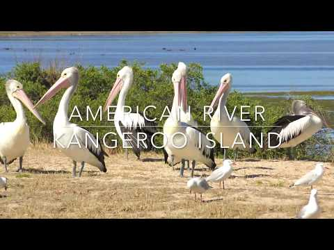 American River - Kangaroo Island - Australia