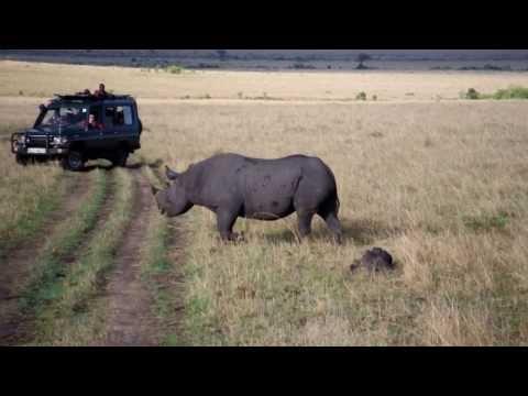Black Rhino in Masai Mara, Kenya