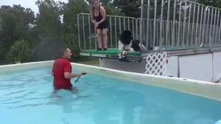 Newfoundland Pup Bodhi Gets Dock Diving Lessons! 2015