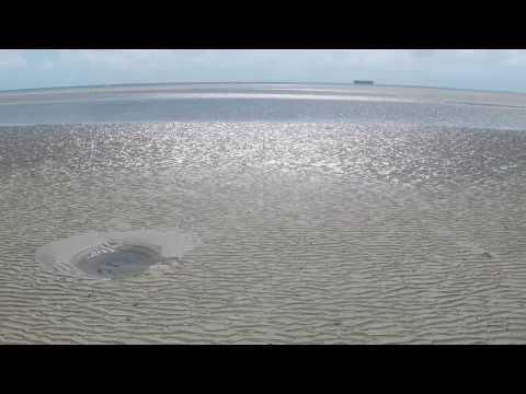 Cape Tribulation   Low Tide