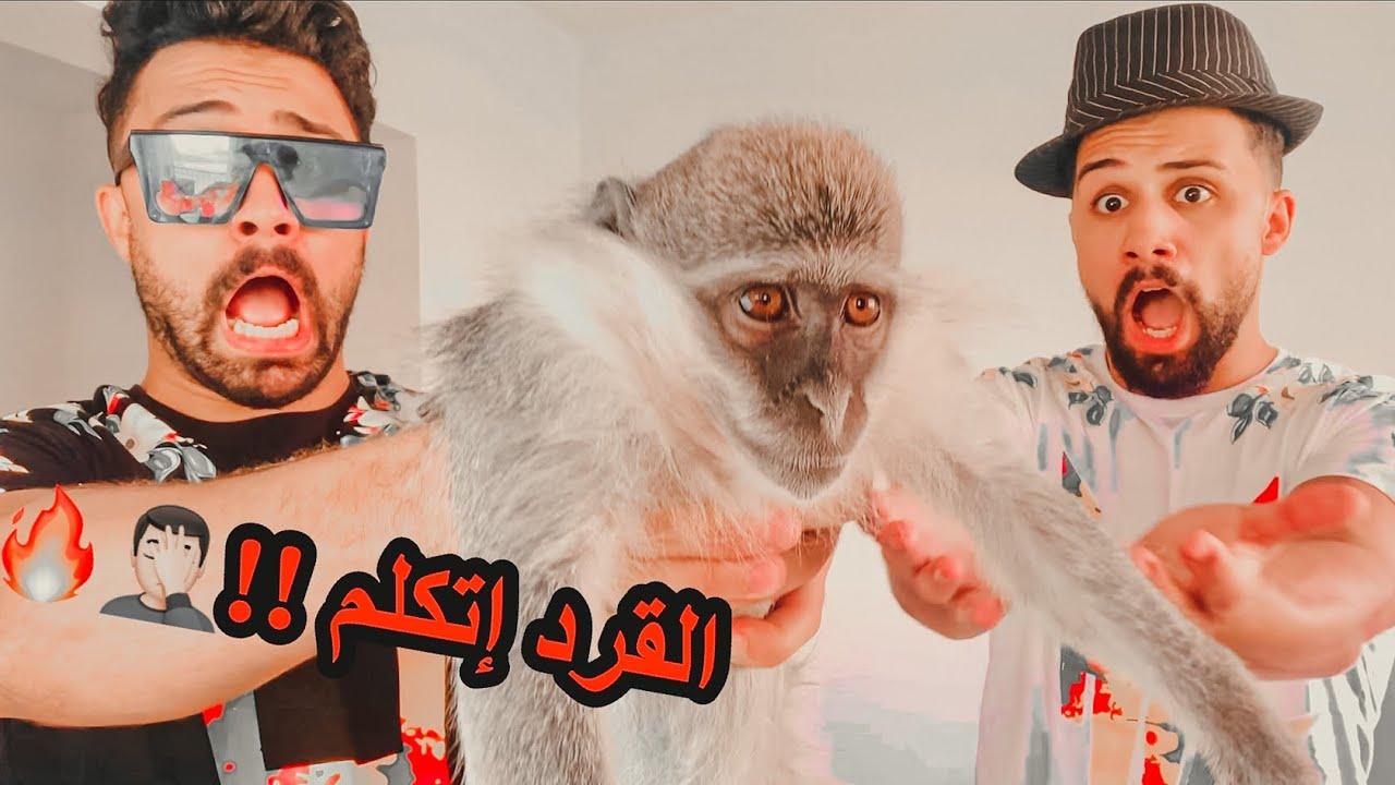خليت القرد يتكلم | مقلب ( كان هيموت من الرعب)🤦🏻🔥😈