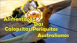 Alimentação das Calopsitas  e Periquitos Australianos
