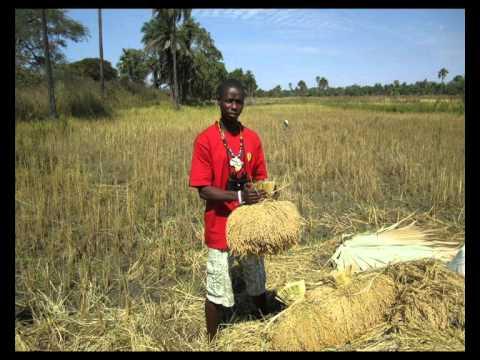 Aladin - Suma Boy Bi (Gambian Music)