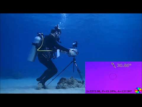 Bioinspired polarization vision enables underwater geolocalization