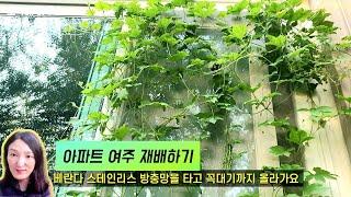 아파트 여주 재배법, 면역력 비염 천식에 좋은 여주가 …