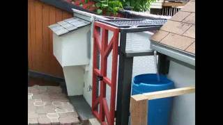 building a chicken coop in a small back yard