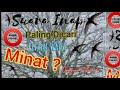 Suara Walet Inap Paling Dicari  Mp3 - Mp4 Download