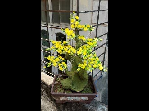 Hướng dẫn  làm hoa mai pha lê, cách vào cành và lên cây hoa mai.