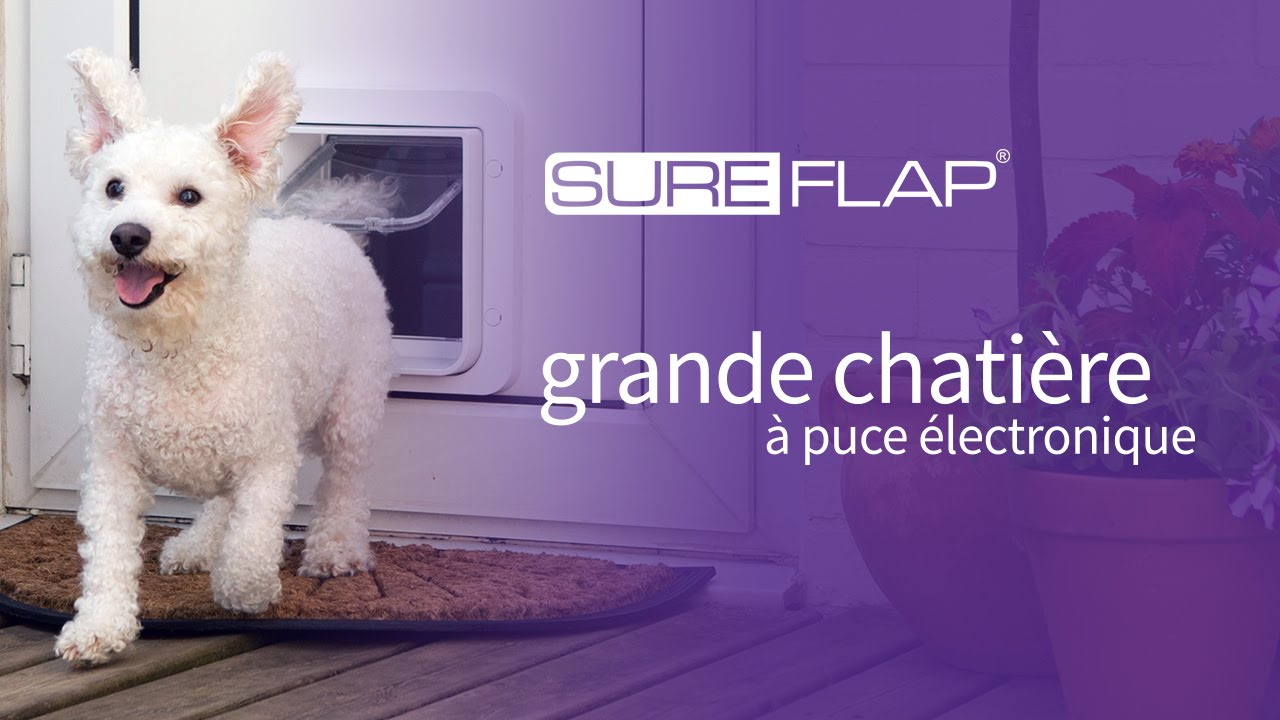 Publicit de la grande chati re puce lectronique - Chatiere pour chat ...