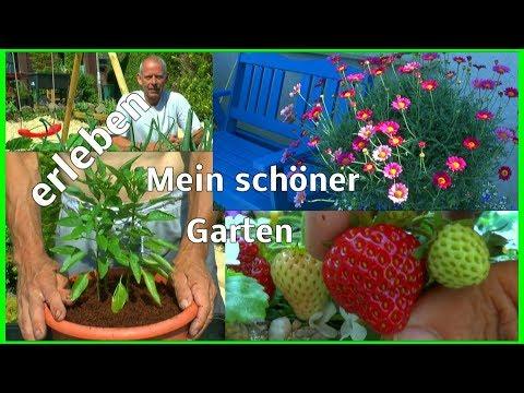 Garten Vielfalt Blumen Gemüse wir topfen Chili und schauen wie es wächst im kleinen Garten
