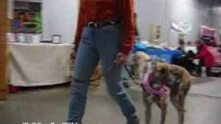 Video Lily the Greyhound and Sandy 120708 download MP3, 3GP, MP4, WEBM, AVI, FLV April 2017