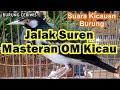Suara Kicauan Burung Jalak Suren Masteran Om Kicau Mantap Full isian(.mp3 .mp4) Mp3 - Mp4 Download