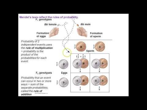 Genetics :Mendelian extensions