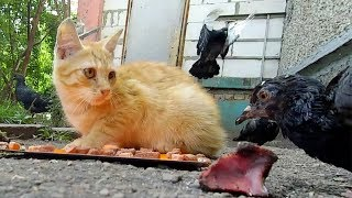 Stray Cats and Kitten Share Food With Birds