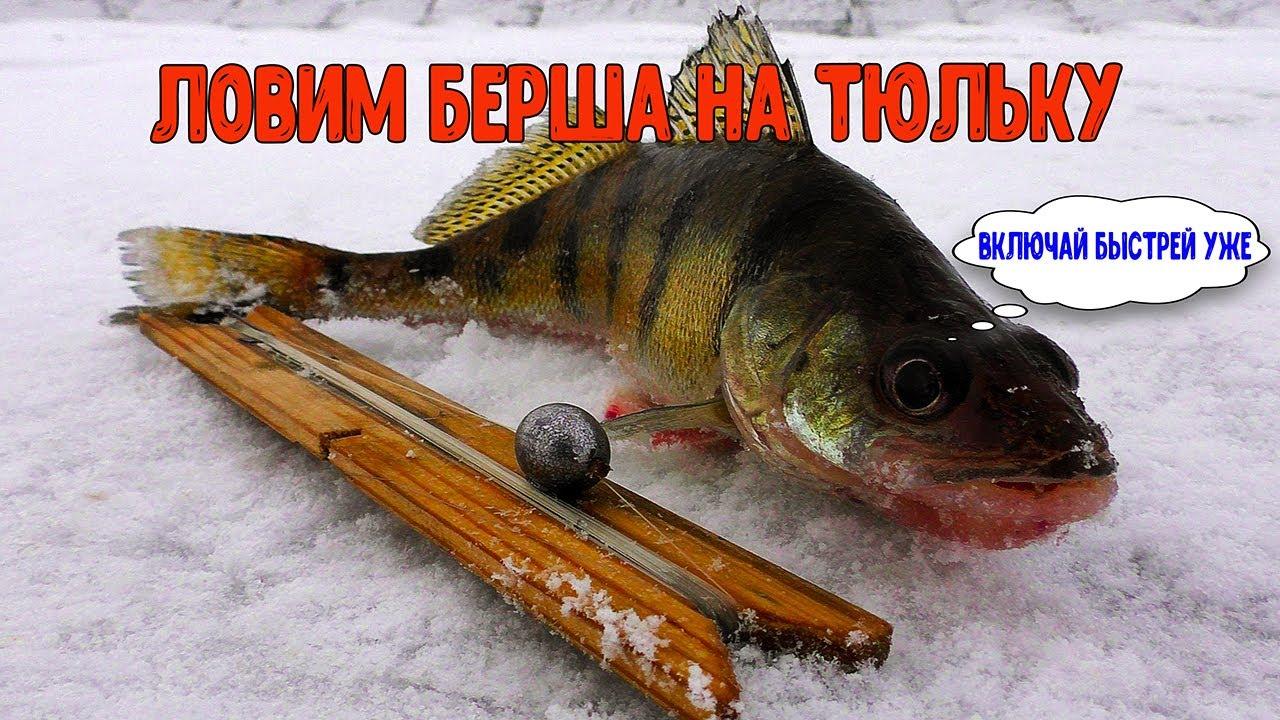 Ловля берша на червя зимой