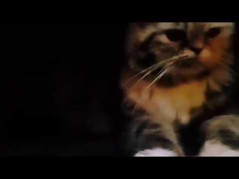 Unduh 64+  Gambar Kucing Garfield Lucu Imut HD