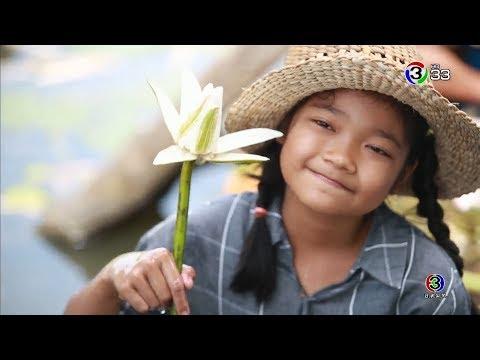 สายบัว ที่บ้านแหลม จ.สุพรรณบุรี - วันที่ 07 Sep 2019