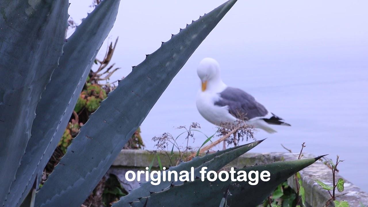 Kodak look on Premiere/After effects