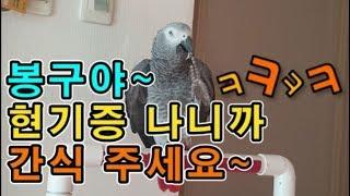 [수다쟁이 회색앵무 코코] EP.2 앵무새가 애타게 &…
