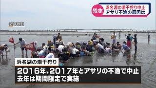2018年、3年ぶりに復活した浜名湖・弁天島の観光潮干狩りですが、...