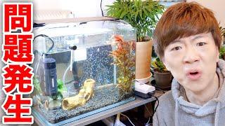 【摩訶不思議】熱帯魚の水槽に突如いるはずのない謎の貝が出現しました。。。