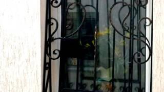 видео Кованые решетки на окно по низкой цене