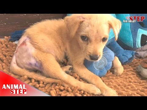 Update – Suffering Puppy Who Close-To-Die Finally Healed