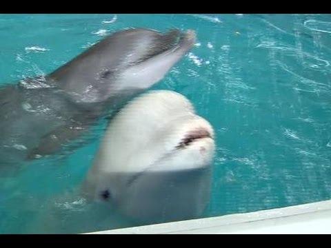 Pembukaan Dolphinarium Baru di Moskow
