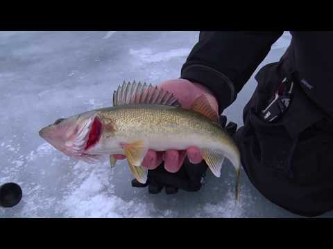 MidWest Outdoors TV Show #1656 - Mille Lacs Ice Walleye