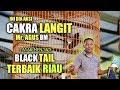 Cakra Langit Blacktail Terbaik Riau Rebut Juara Di Kelas Campuran Inser rb Gap Bird Club  Mp3 - Mp4 Download