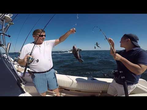 NYC Black Sea Bass , Trigger Fish & Porgie Fishing