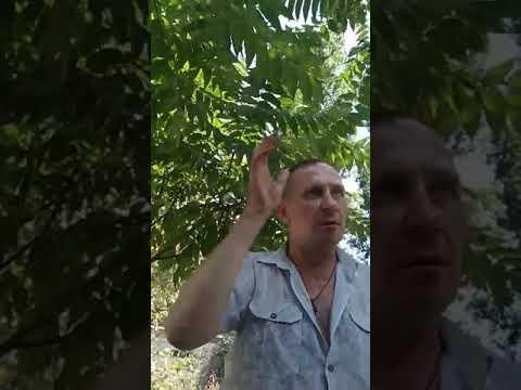 ІншеТВ: Николаев. Разговор с маршрутчиком 2 24.08.2019