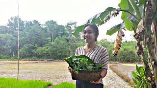 Gadis Dayak    Mencari Sayur Hutan Masak Di Pondok Sawah