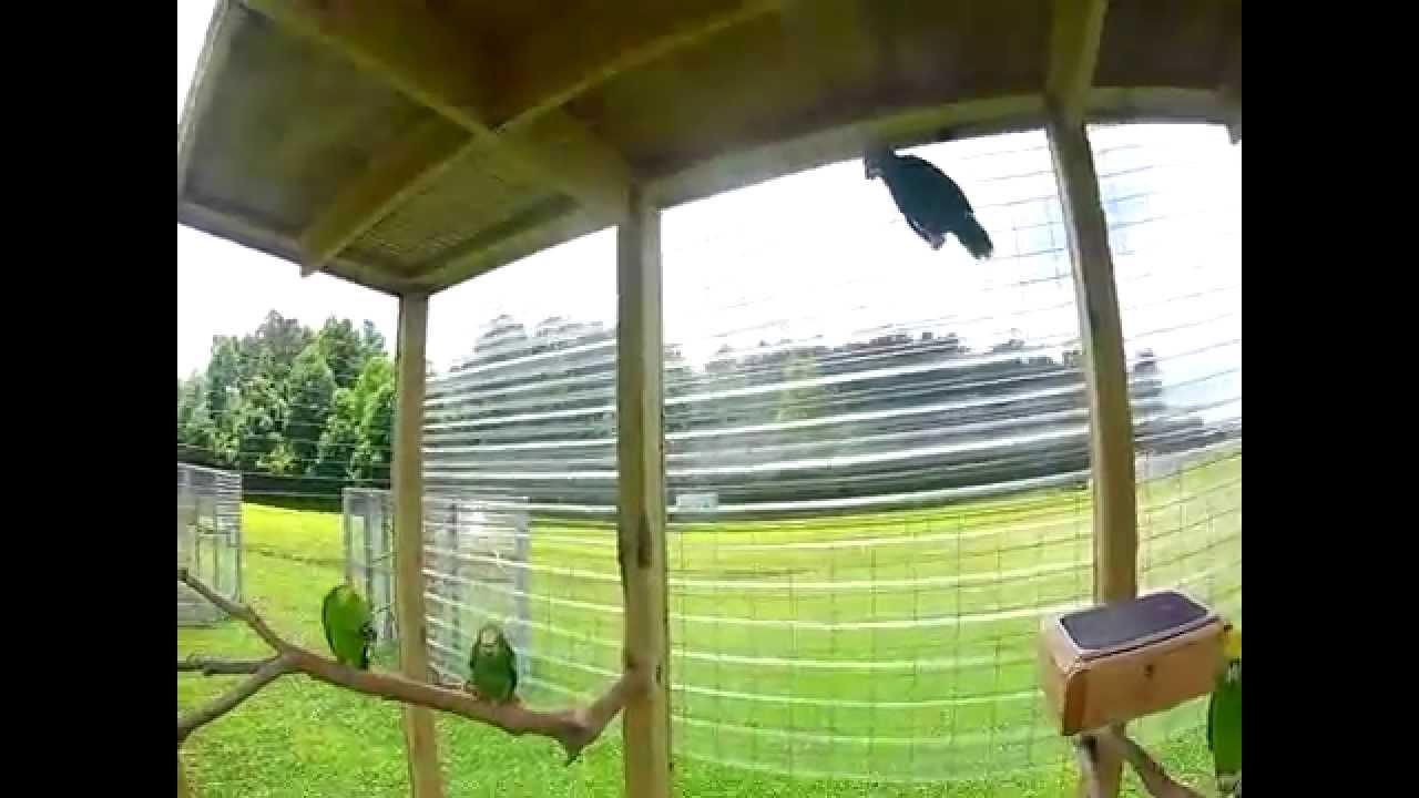 cape fear parrot sanctuary cape fear parrot sanctuary