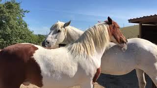 Caballo y <b>yegua</b> rescatados dándose amor